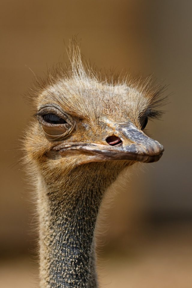 ostrich head | Expand with Julius and Xpnsion Network