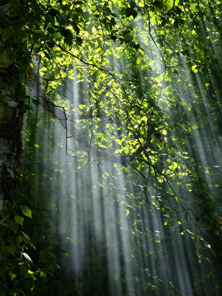 forest-light-nature | Expand with Julius and Xpnsion Network